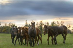 Yearlings 8259