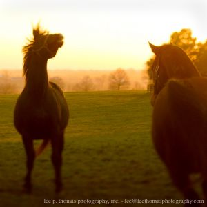 Mares at Sunset