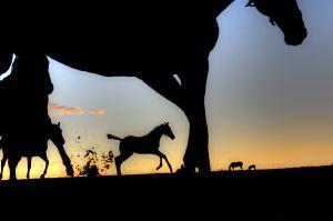 Foals At Dawn
