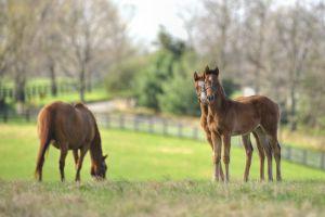 Foals, Kentucky Springtime