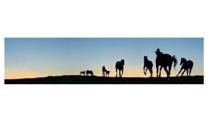 Kentucky Daybreak